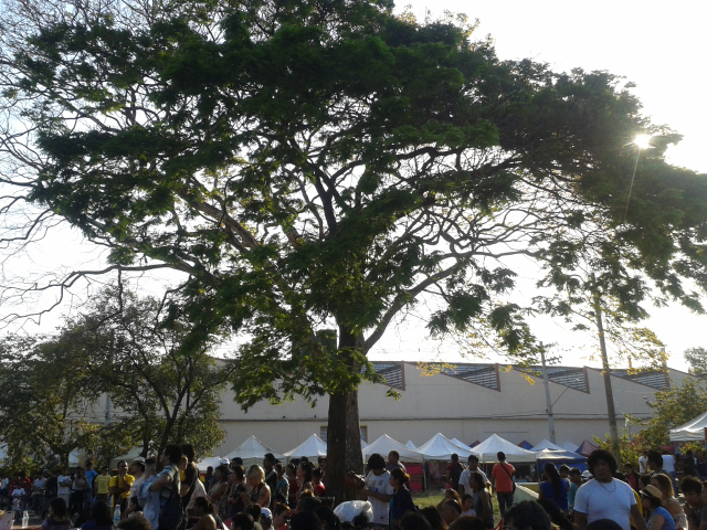 Árvore na praça Kantuta, em São Paulo. Migrantes são parte da sociedade e não devem ficar à parte dela. Crédito: Rodrigo Borges Delfim