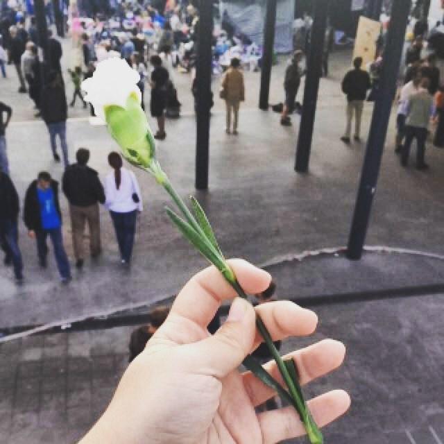 Flor que voluntários húngaros distribuíram aos refugiados em Budapeste. Crédito: Rafaela Carvalho - 06.09.15